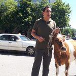ნიკა ვარდოშვილი თელავის მერიასთან ძროხასთან ერთად მივიდა