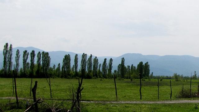 საქართველოში ქარსაფარი ზოლების აღდგენა მოხდება