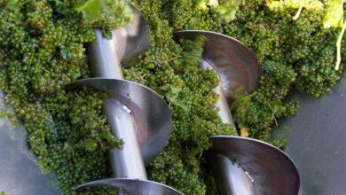 Photo of ბოლო მონაცემებით კახეთში 73 ათასი ტონა ყურძენია გადამუშავებული