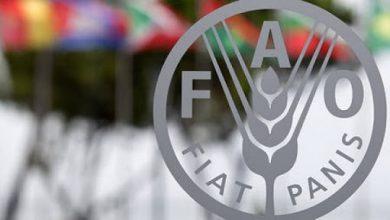 Photo of გასულ თვეს FAO-ს ფასების ინდექსი გაიზარდა