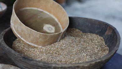 Photo of ალვანში უნიკალური თუშური პურის თესვის ღონისძიება გაიმართა.