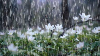 Photo of წვიმა, სეტყვა, ქარი – როგორი ამინდია მოსალოდნელი დღეს საქართველოში