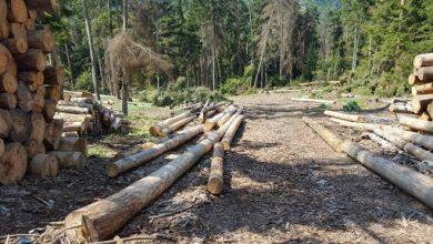 Photo of კახეთის რეგიონში ხე-ტყის უკანონო ჭრისა და ტრანსპორტირების 3 ფაქტი გამოავლინეს
