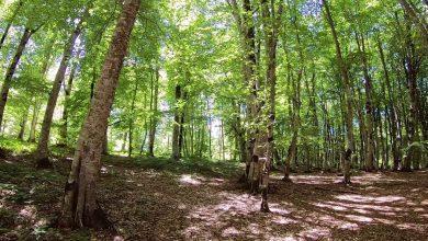 Photo of კახეთში ტყეების ინვენტარიზაცია, სატყეო-სამეურნეო და საქმიანი ეზოების მოწყობა იგეგმება
